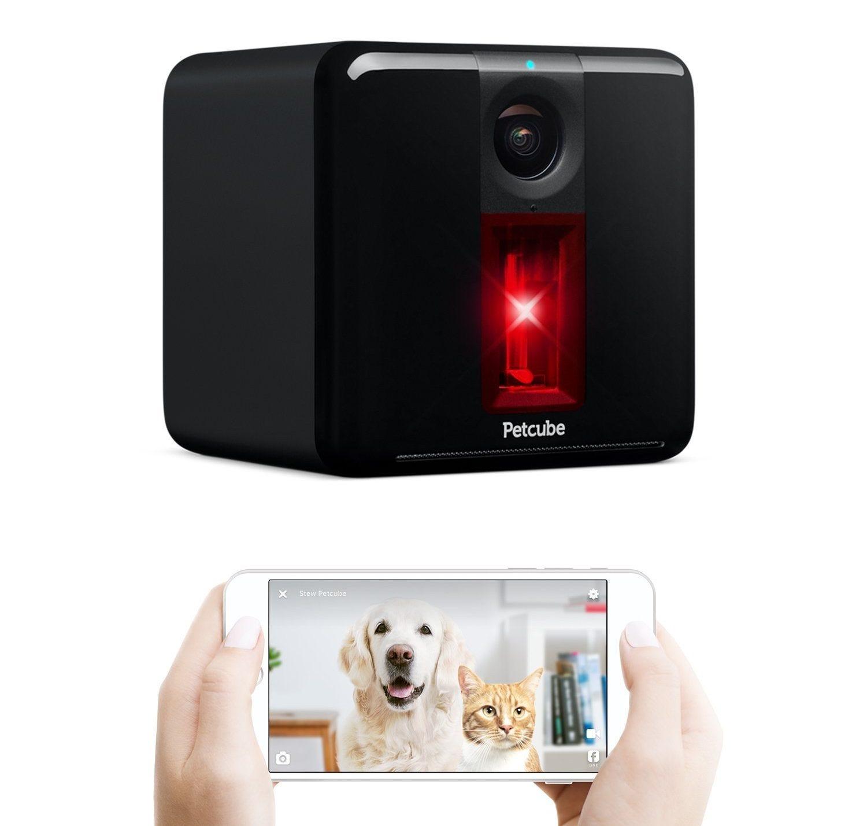 Die besten Pet Cams für Katzen, Hunde und ihre Doting Besitzer