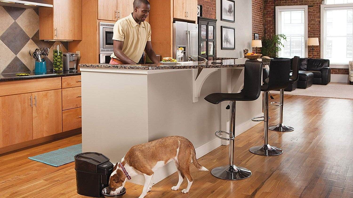 The Best Automatic Dog Food Dispensers