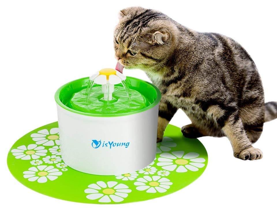 Alles was du brauchst für dein neues Kätzchen