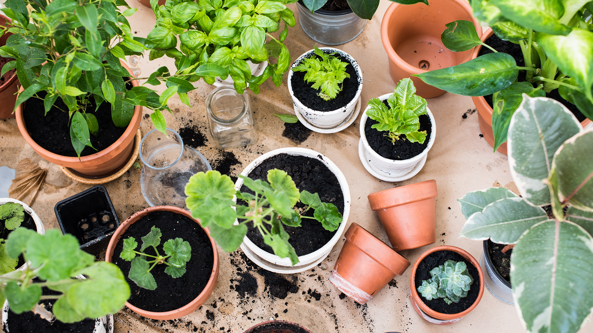 various potted plants in a state of being repotted on a table