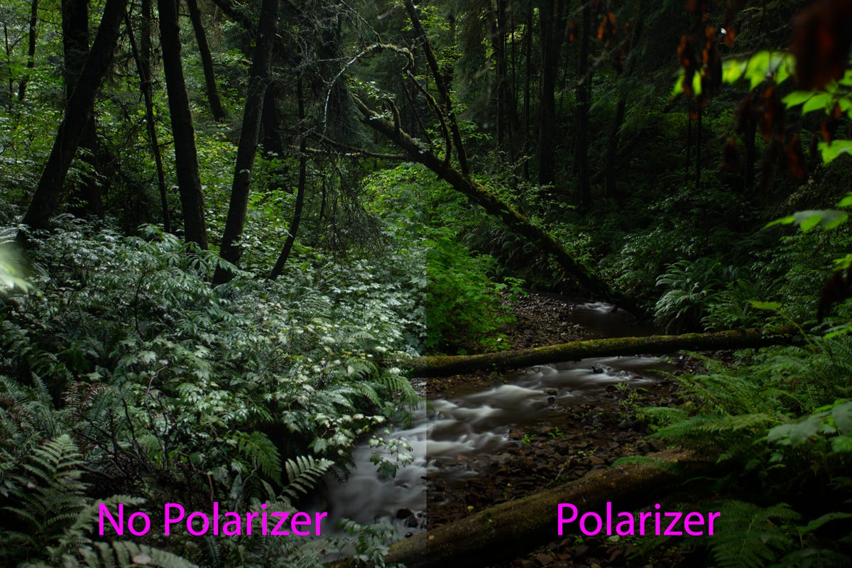 comparison of a forest landscape with and without a polarize