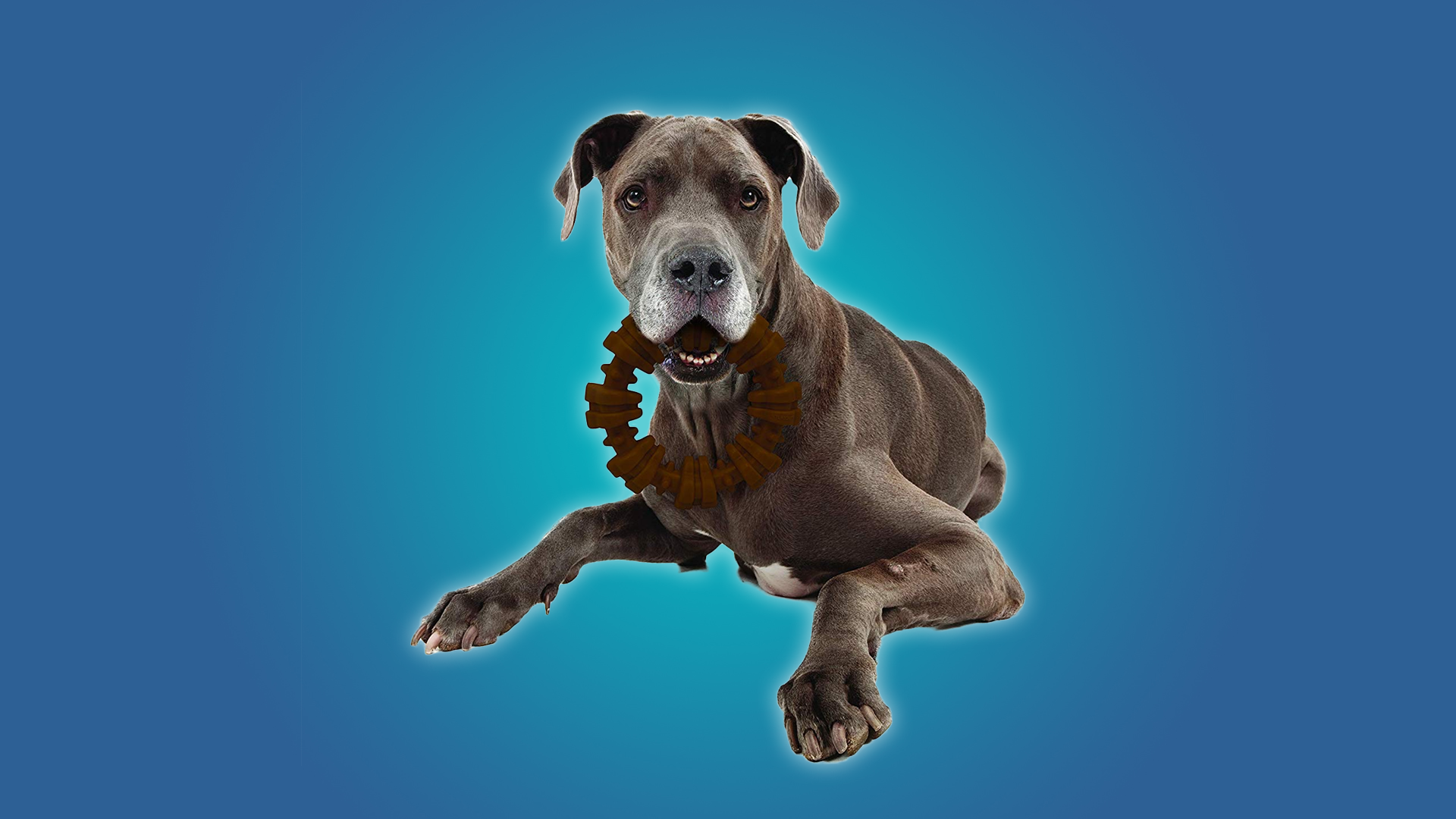 Dog chewing on a Nylabone ring
