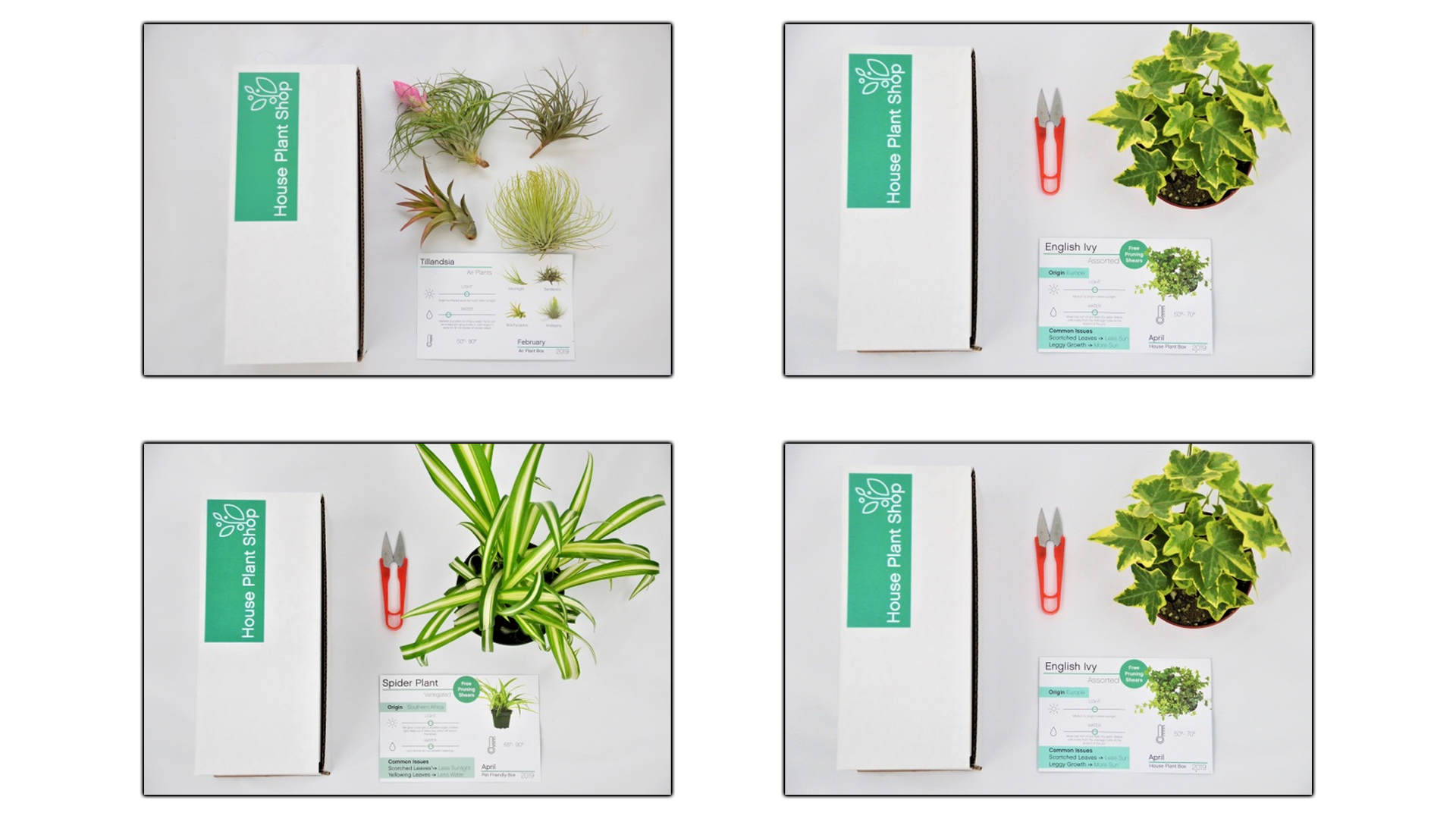 Photos of the Cratejoy Plant Box with various house plants