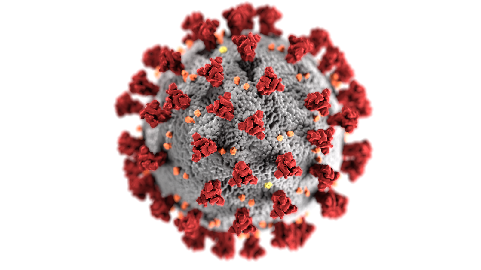An illustration of the coronavirus, with red spikes.