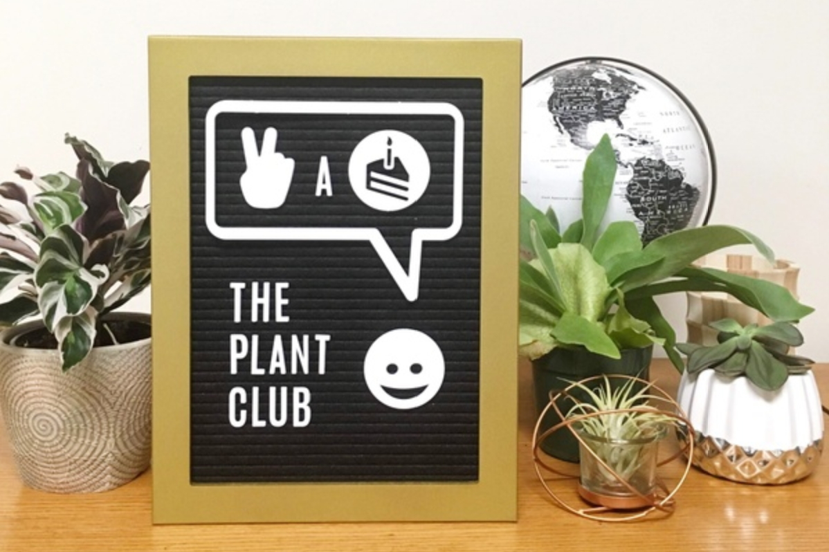 The Plant Club monthly stylish plants and pots subscription box air plants houseplants succulents