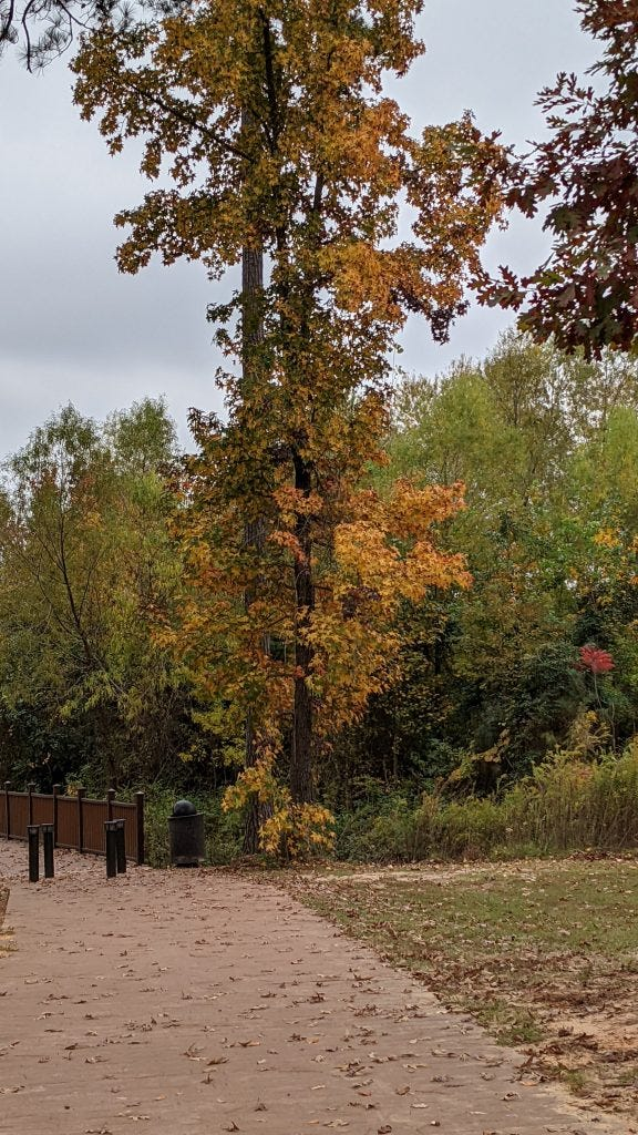 A sample image from the Pixel 5. A walking path and tree with yellow leaves in the distance, zoomed 2x