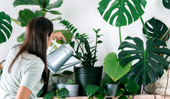 These Apps Will Help You Keep All of Your New Houseplants Alive