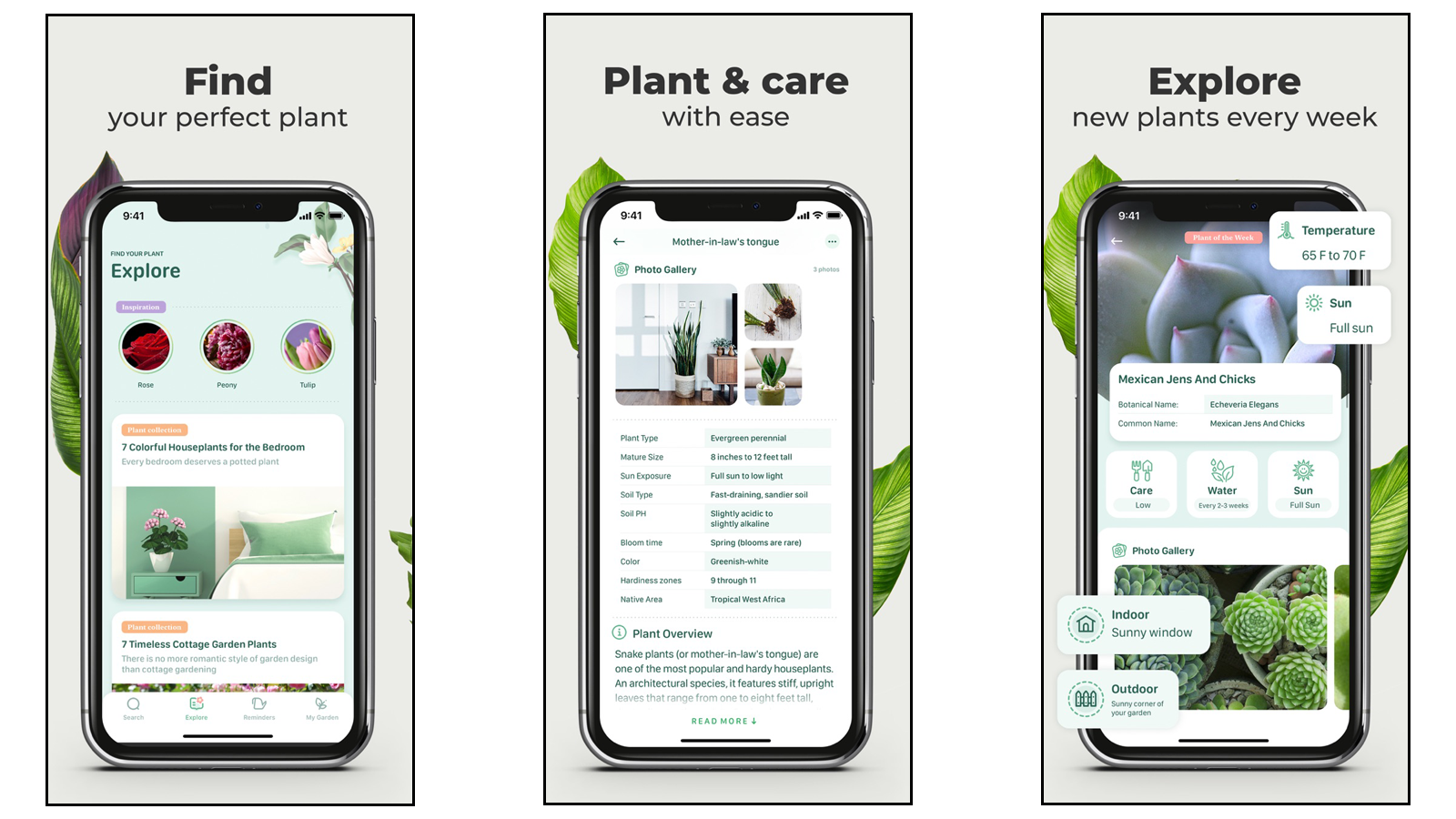 Blossom app full of plant information and care tips
