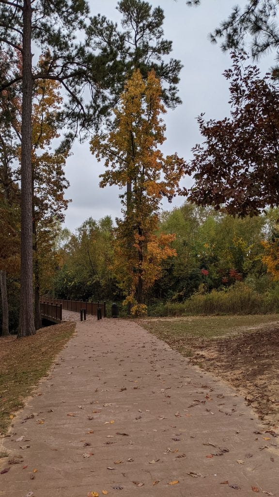 A sample image from the Pixel 5. A walking path and tree with yellow leaves in the distance
