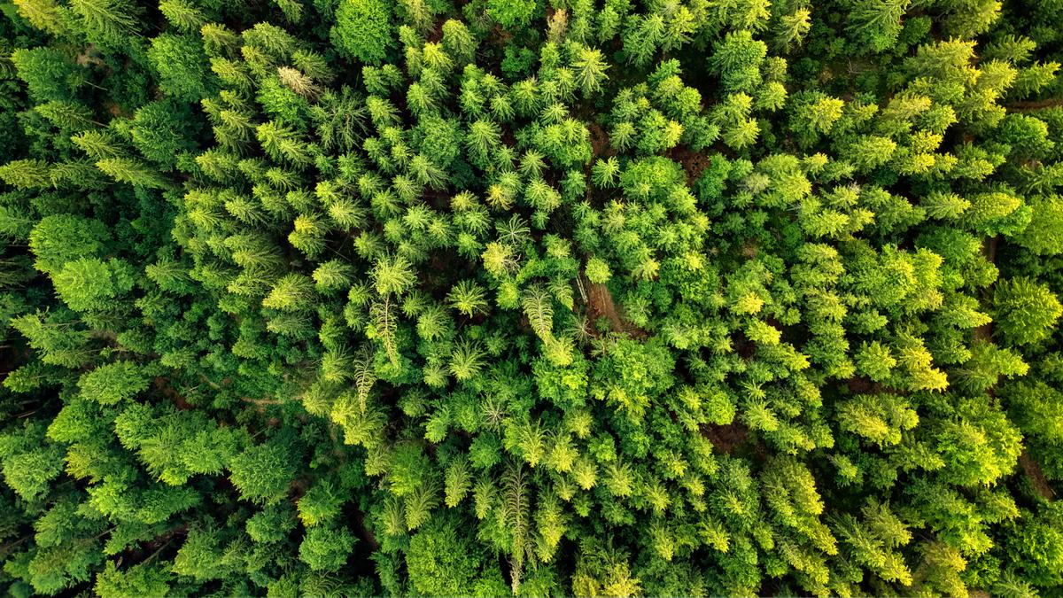 Summer warm forest aerial view