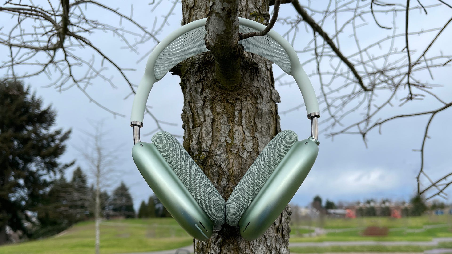 AirPods Max hanging on a tree