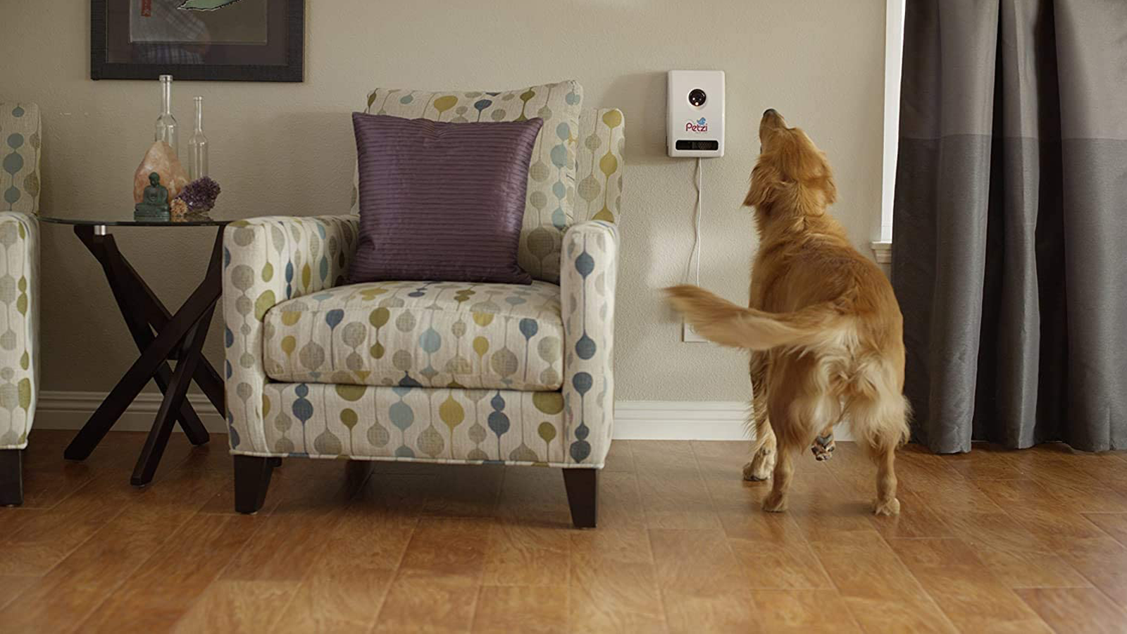Petzi treat cam mounted to a wall with a dog looking at it