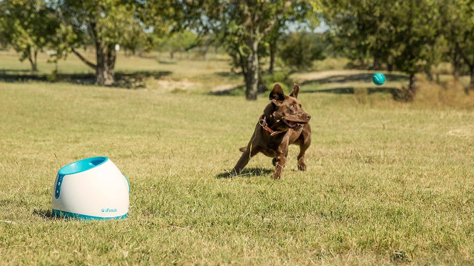 iFetch Ball Launcher shooting out ball for dog in park