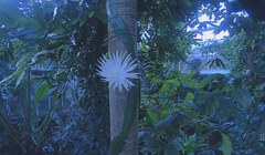 Watch an Ultra Rare Moonflower Bloom in a Time-Lapse Video