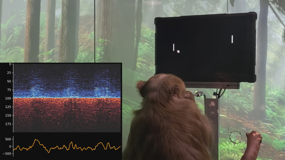 Macaque with Neuralink playing Pong