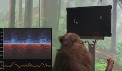 Watch a Monkey Play Pong with a Neuralink Brain Implant