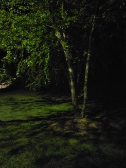 Shot of a tree at night taken by ZTE Axon 20 5G