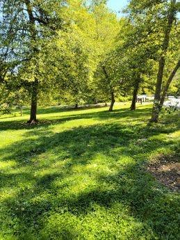 Picture of a green field taken by ZTE Axon 20 5G