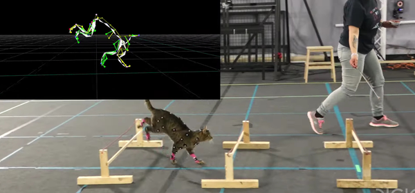 We're Not Kitten Around: This Cat Motion Capture Video Is Purrfection