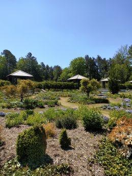 Picture of garden taken by ZTE Axon 20 5G