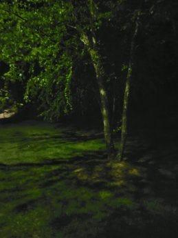 "Shot of a tree at night taken with ZTE Axon 20 5G ""Night Mode"""