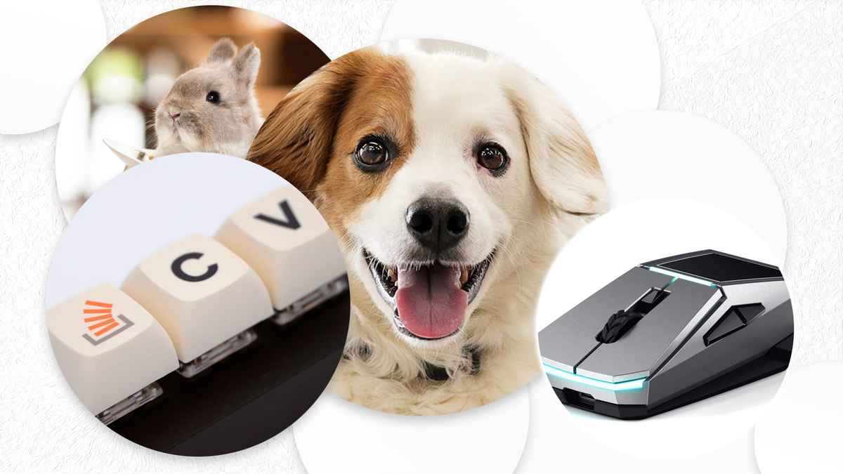 Photos of a cat, dog, mouse, and keyboard.