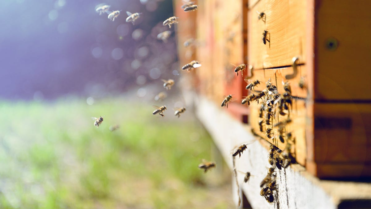 A swarm of bees next to a home.
