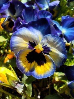 Close-up of flower using ZTE Axon 20 5G macro lens