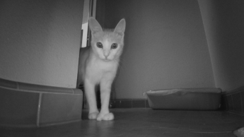 My cat captured by Ebo SE's black and white night vision camera.