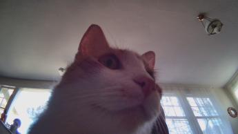 Funny photo of my cat from Ebo SE's camera