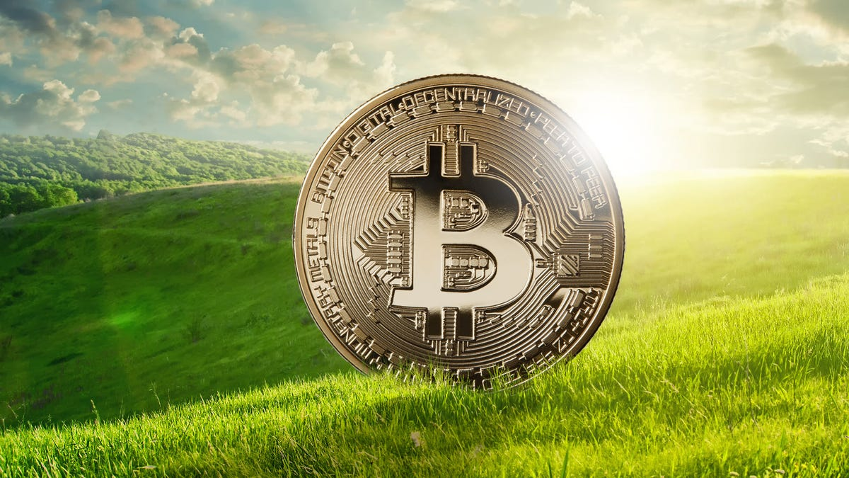 A physical Bitcoin coin standing in a rolling field of grass.