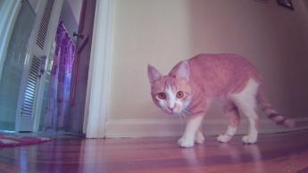 Photo of my cat from Ebo SE's camera