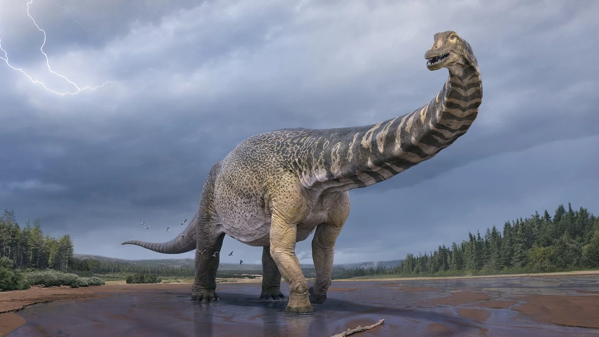 Cooper, the largest Austrlian dinosaur.