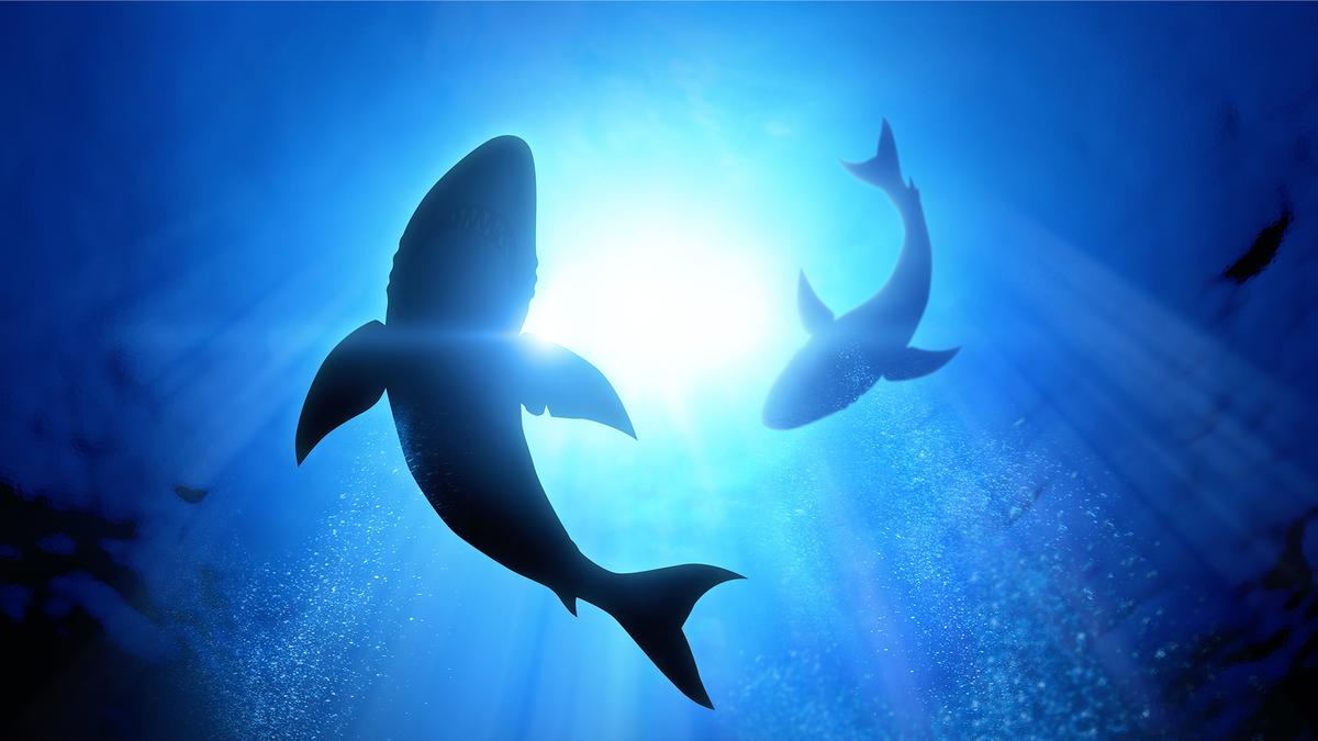 Sharks swimming in dark waters.