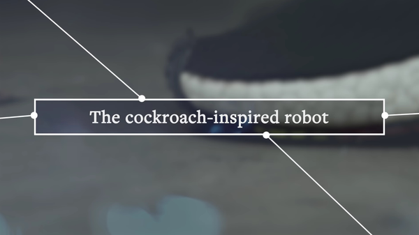 This Cockroach-Like Robot Could Be Used to Investigate Disaster Sites