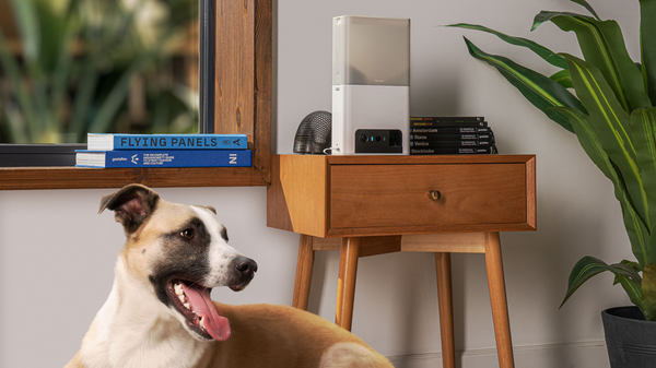 Petcube's New Lite Treat Slinger Is Half the Cost of the Original