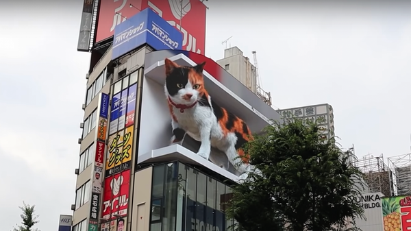 This Massive 3D Cat Billboard Is So Realistic You'll Want to Go See It in Person