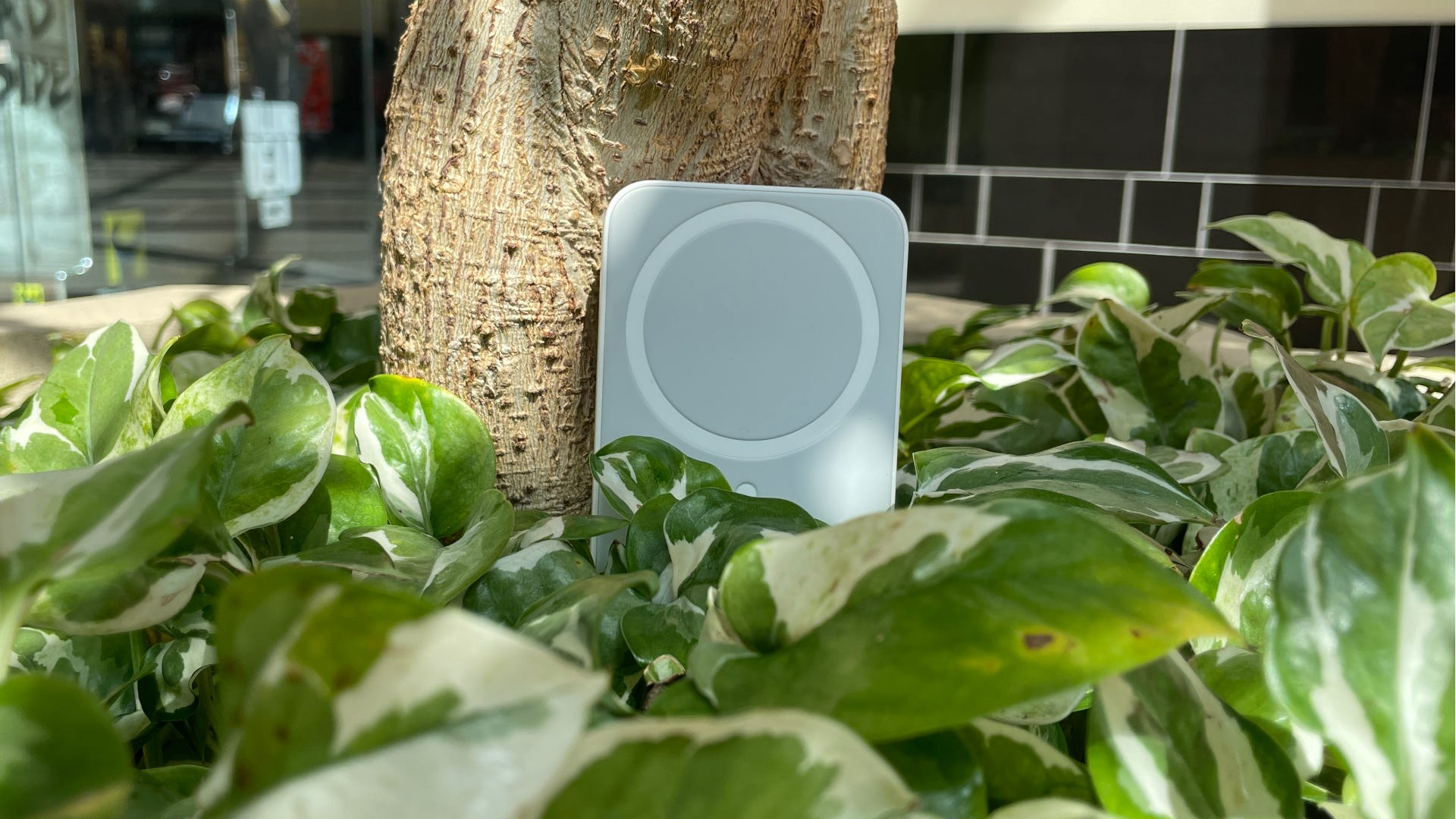 MagSafe Battery Pac lying in hostas next to a tree.