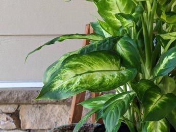 a closeup of a leaf on said plant