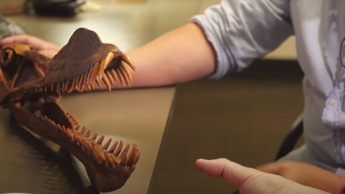 A scientist holding the fossil of the newly-discovered pterosaur