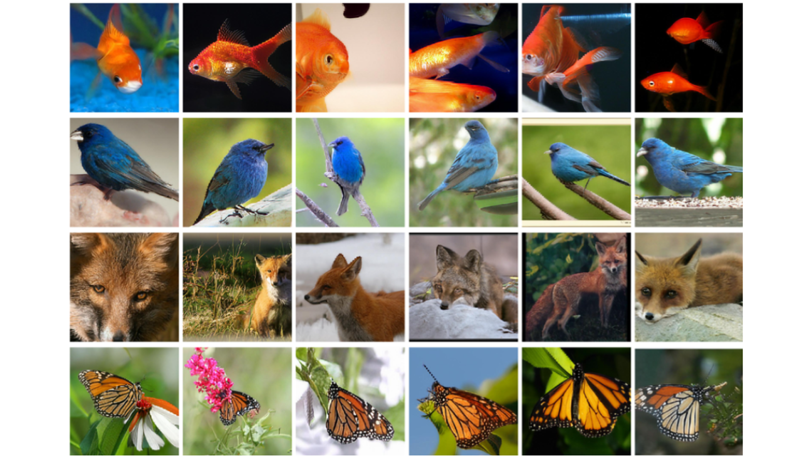 Selected example generations of class conditional 256×256 natural images for the AI engine to learn from. Each row contains examples from a particular class.