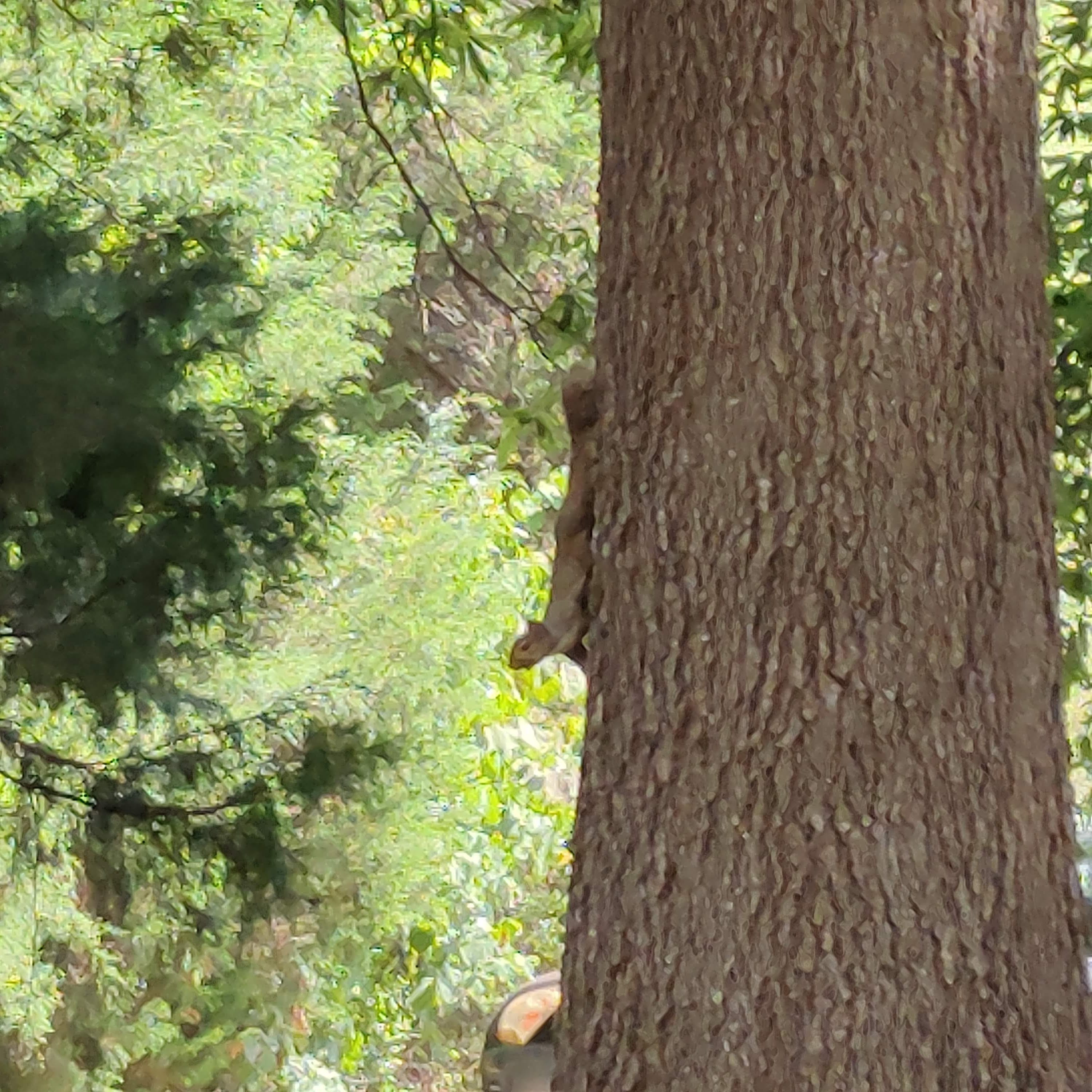A squirrel climbing a tree infront of a forest