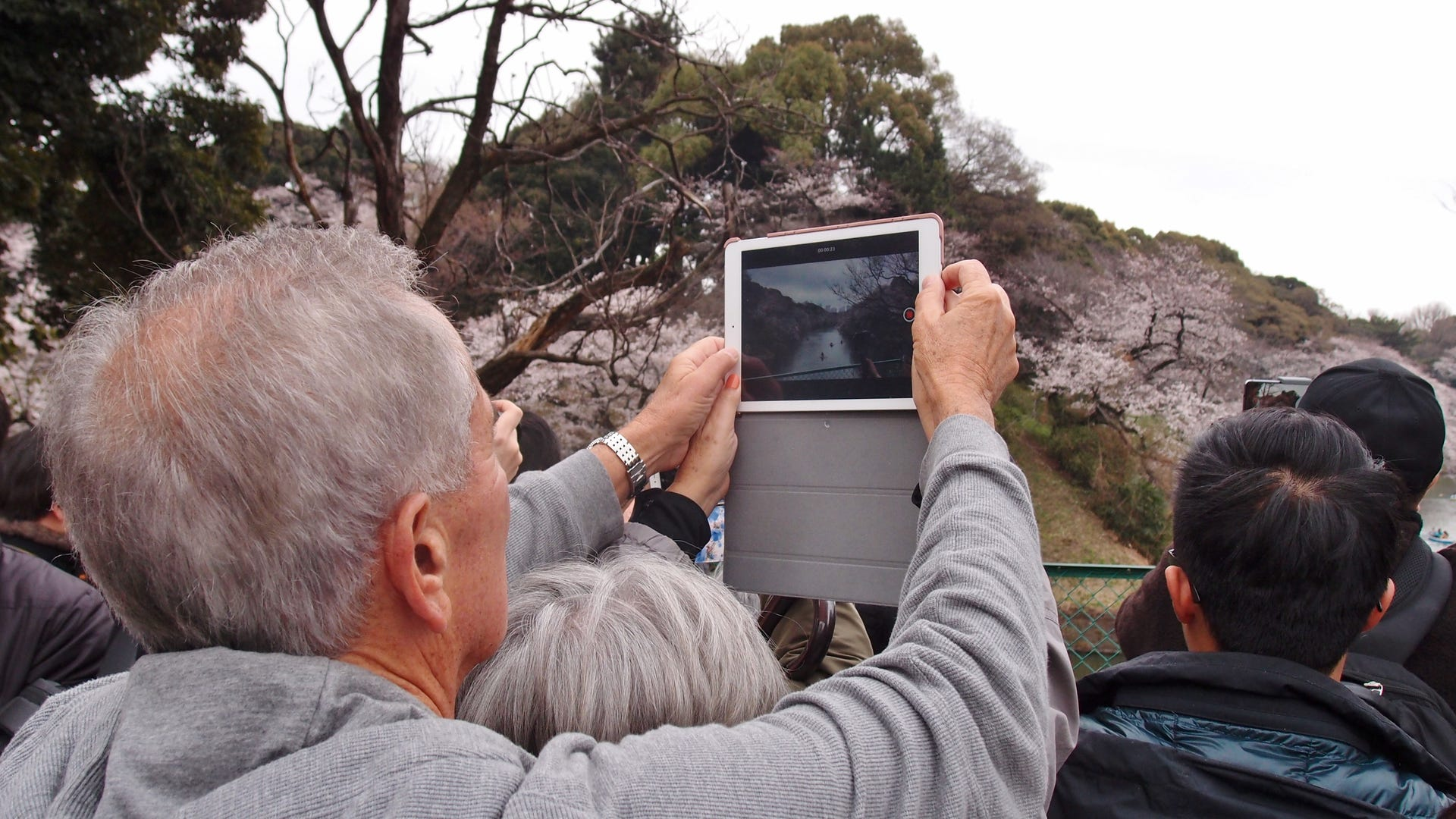 A man taking a photo of cherry blossoms with his iPad