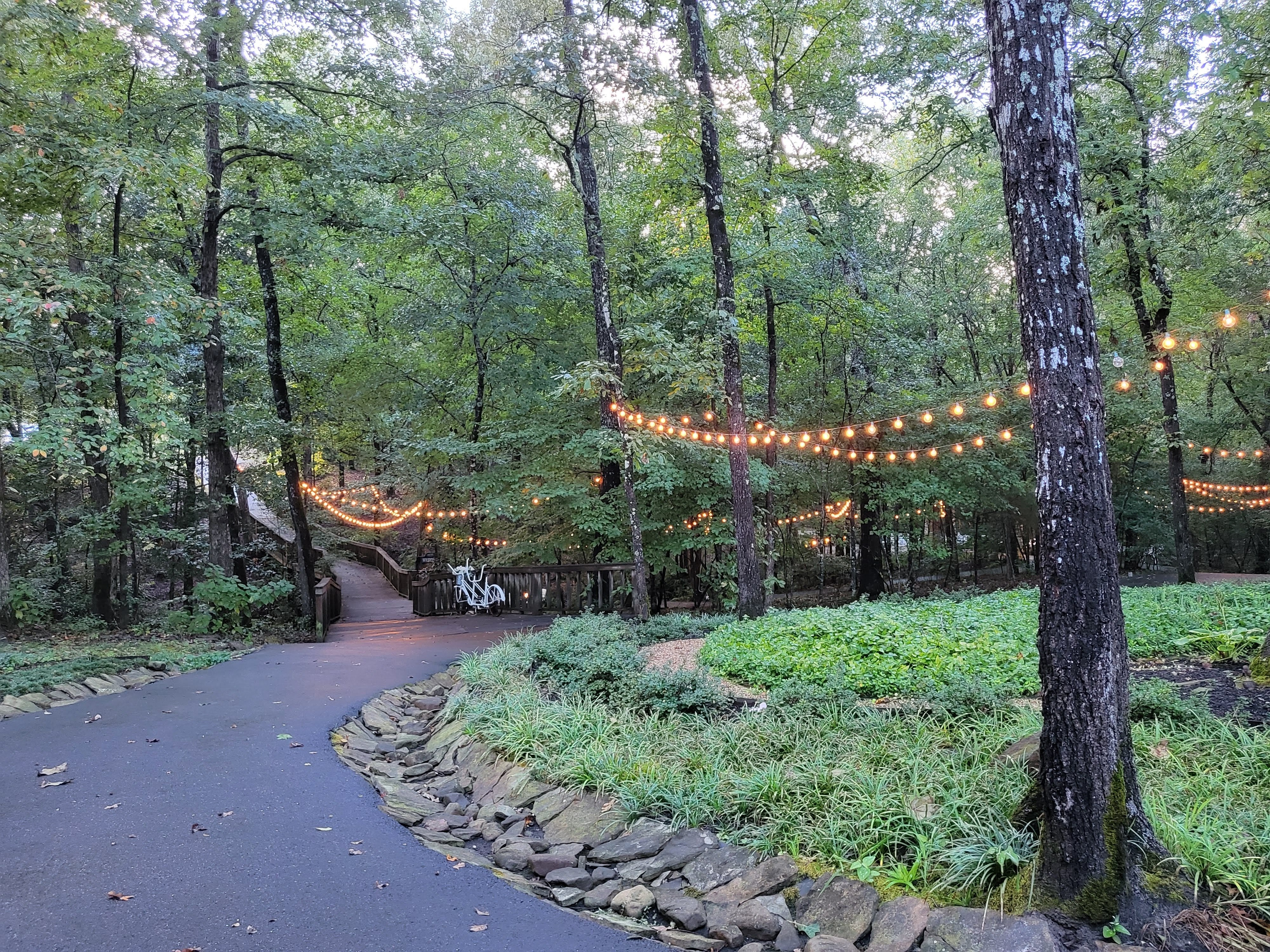 A walkway in the woods, string lights all around