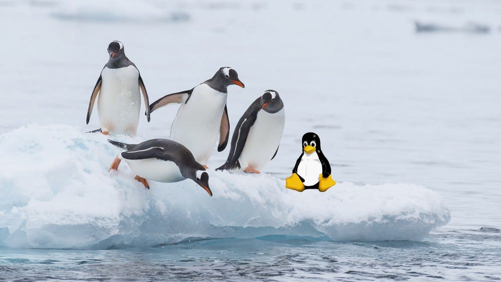 Four Gentoo penguins and the Linux Tux mascot on an ice flow.