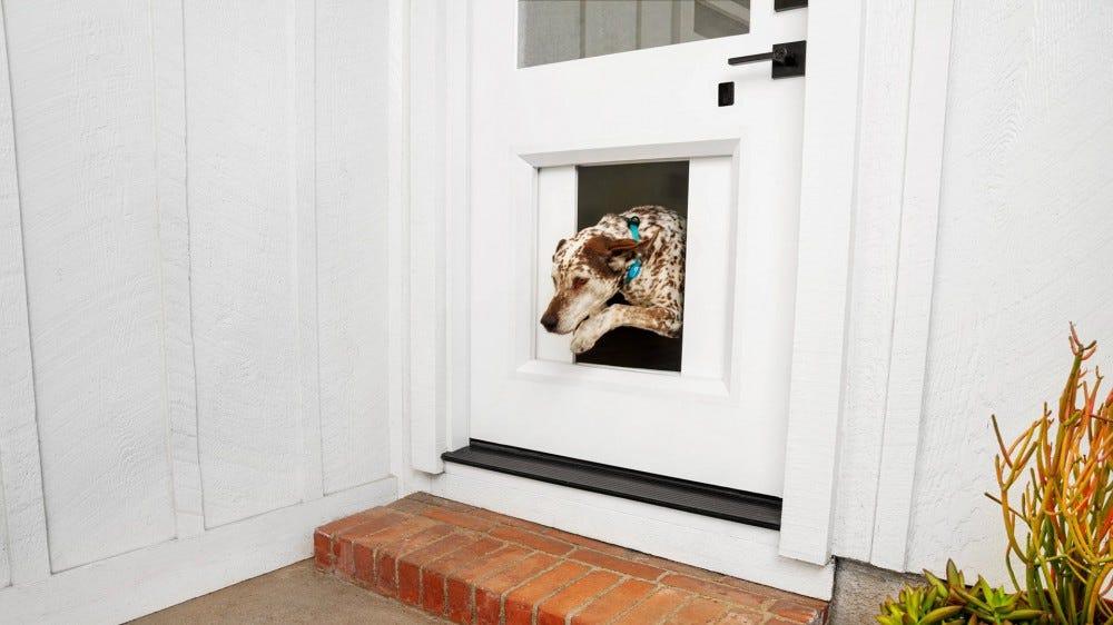 A dog hopping through an opening in a door.
