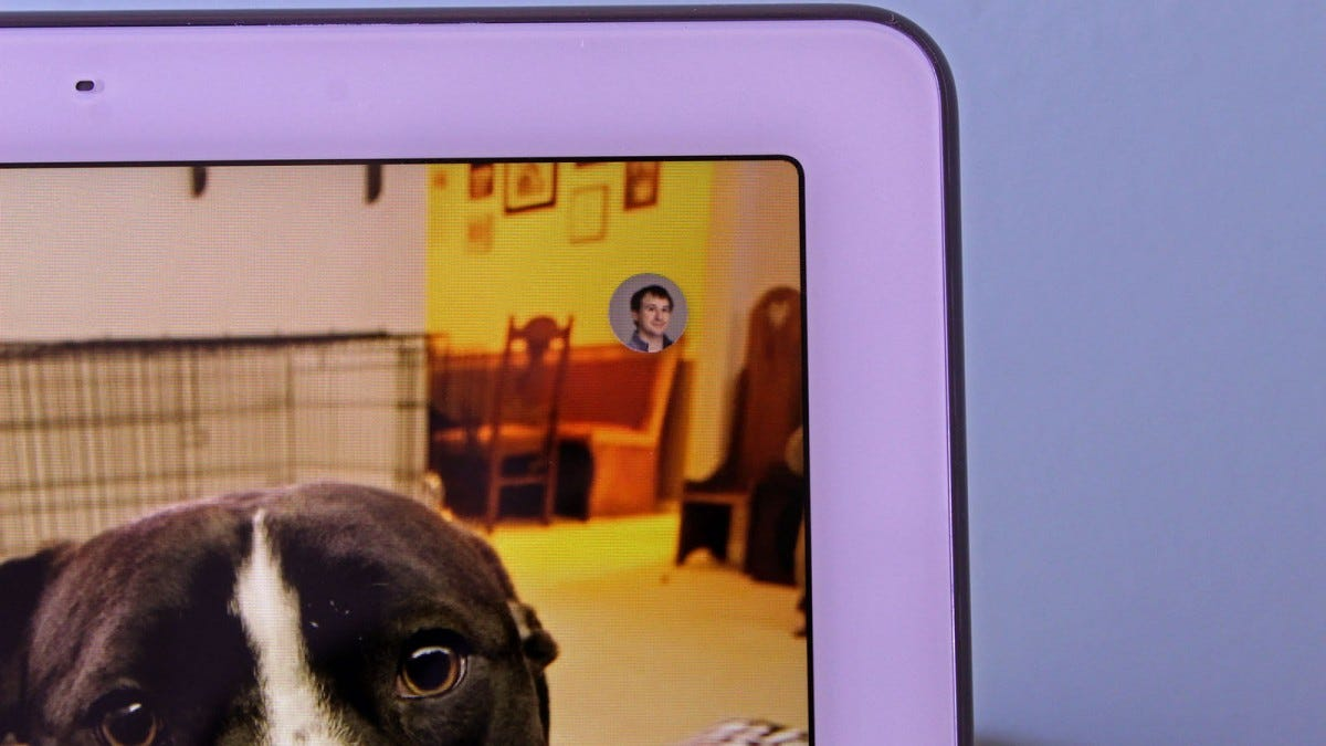 A dog in the main frame, and a profile photo of the author in the upper-right corner of the Nest Hub Max screen.