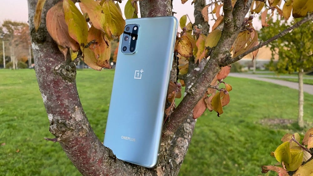 OnePlus 8T on a tree