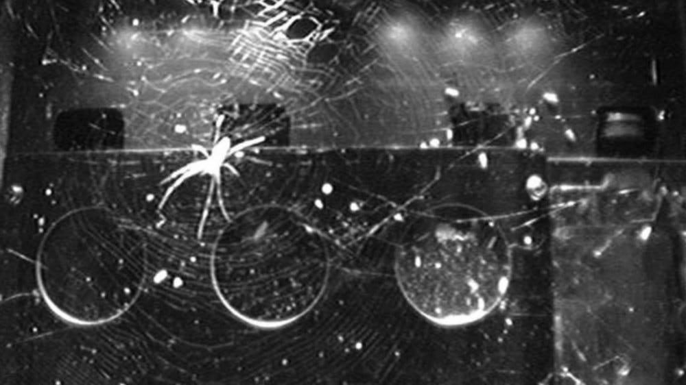 Spider building a symmetric web in zero gravity