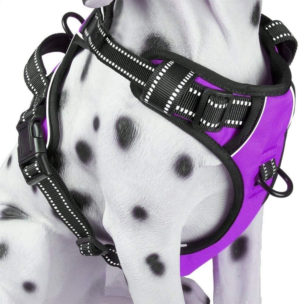 dog harness, dog walk, pet harness, collar, puppy,
